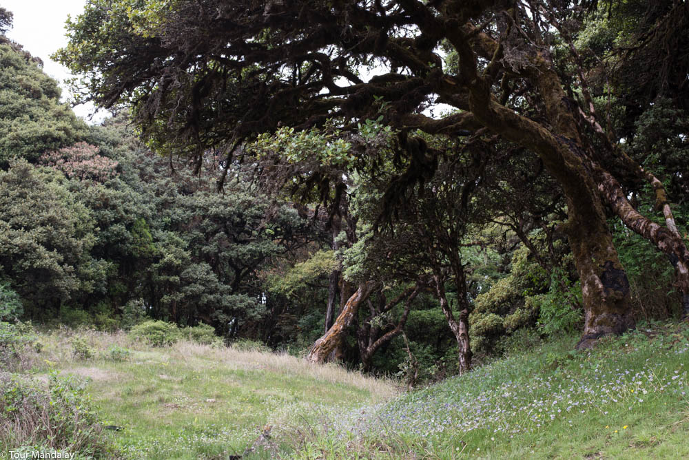 A grassy area close to the summit of Mt Victoria
