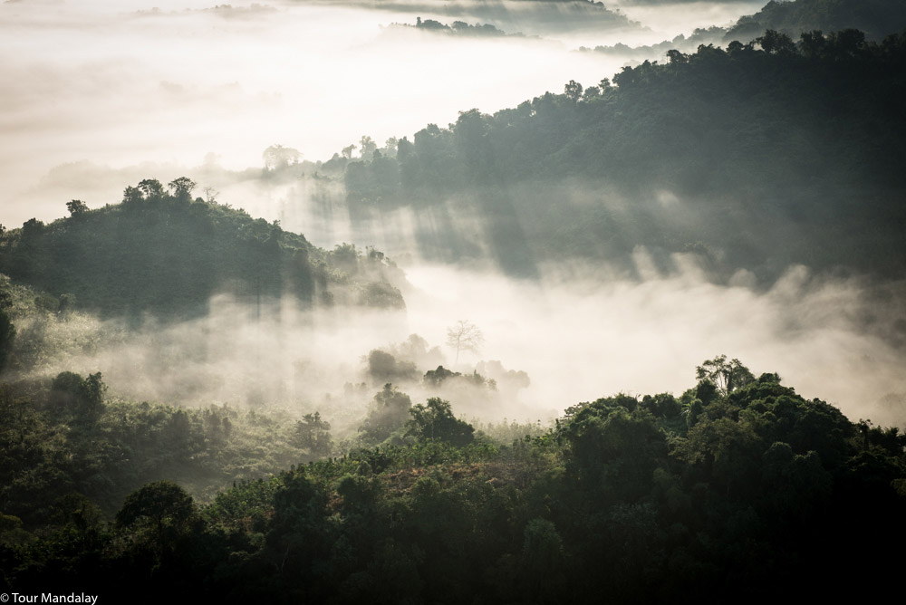 The sun's rays cut through the jungle mist