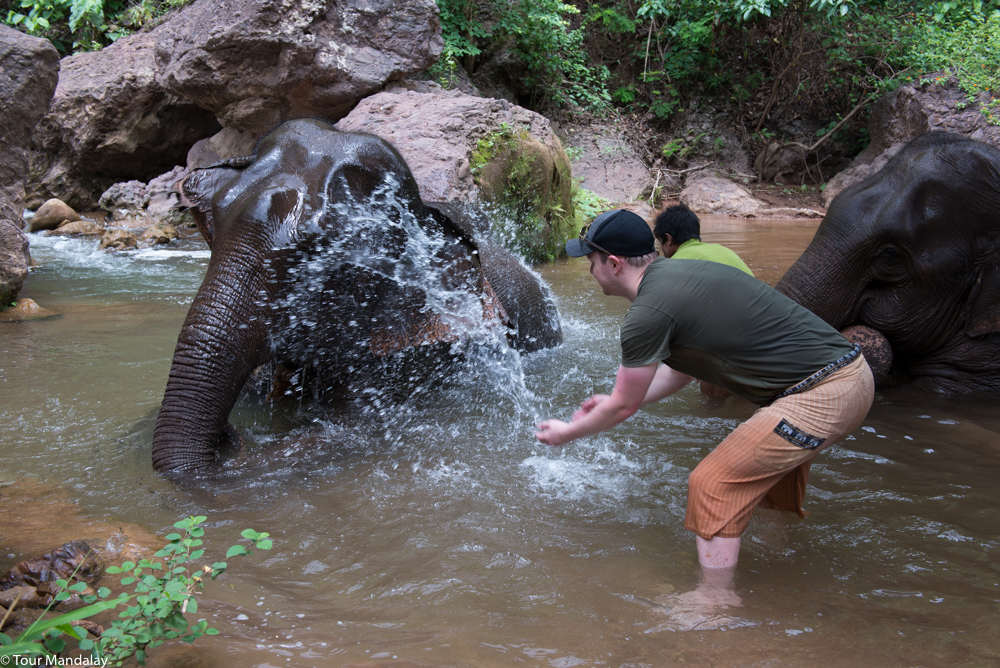 One of GHV's elephant receives a good scrub down